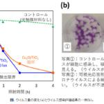 光触媒による新型コロナウイルス不活化を確認